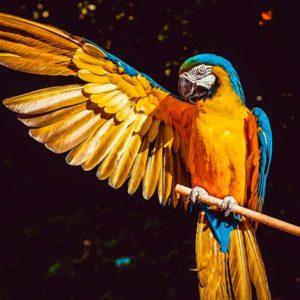 curso-de-especialista-en-animales-exoticos-online